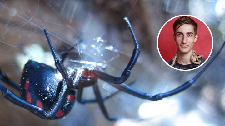 Увидел паука — не трогай его: инструкция для волгоградцев, встретивших на своем пути каракурта