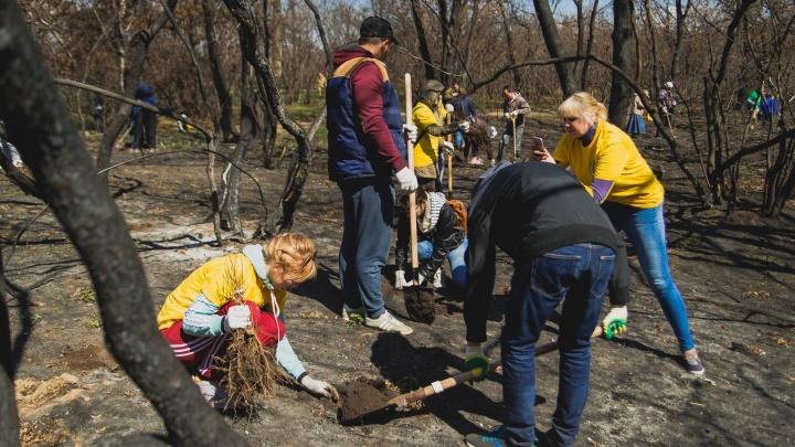 Волгоградцев зовут посадить 4000 дубов и клёнов в Волго-Ахтубинской пойме