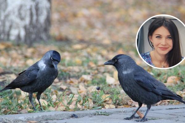 Птицы вполне самостоятельные, чтобы справляться со своими заботами
