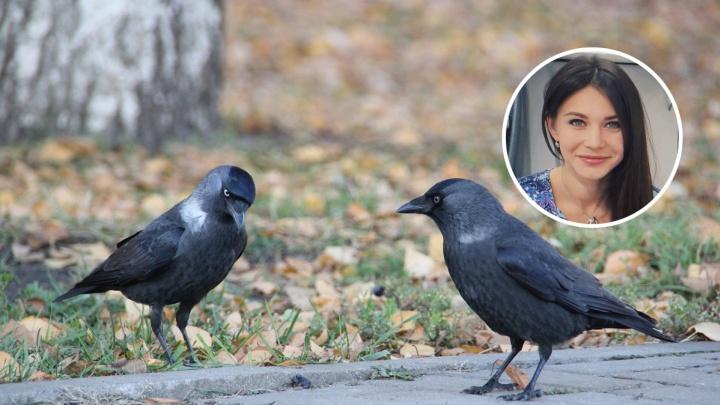 Руки прочь, или Не проходите мимо: когда помощь человека нужна птицам, а когда вас могут и заклевать