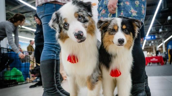 Новая Малефисента, «Чрево кита» и 90 пород собак: самые зрелищные события ближайших дней в Перми