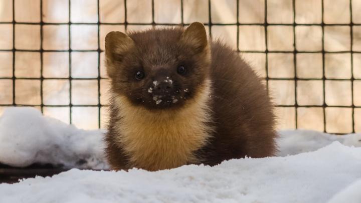 Скоро весна: Новосибирский зоопарк продлит работу на час