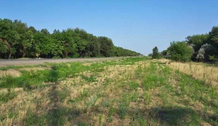 «Посадим осенью»: на трассе под Волгоградом убрали аллею высохших под палящим солнцем деревьев