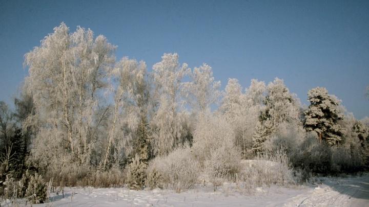 Шадринский дендросад стал особоохраняемой природной территорией