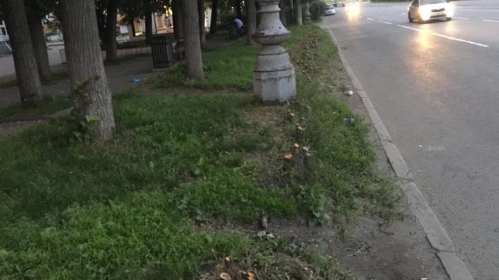 Вместо вырубленных у «Коляда-театра» кустов посадят живую изгородь из боярышника