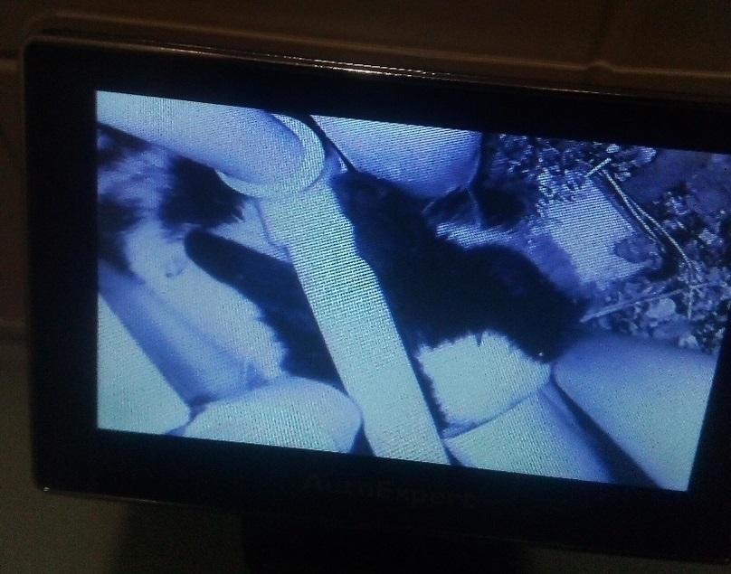 Кролика обнаружили с помощью эндоскопа, животное забилось под трубы