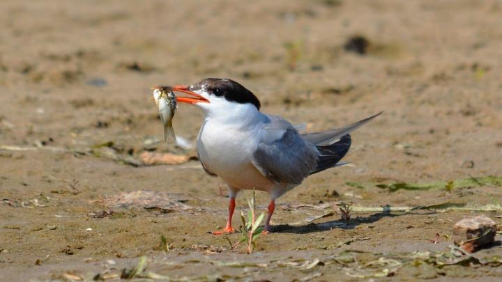 Им не стоит рассказывать о дзене: волгоградский фотограф показал жизнь птиц, скрытую от лишних глаз