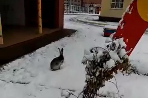 В Уфе сняли на видео, как по территории детского сада бегал лесной зверь