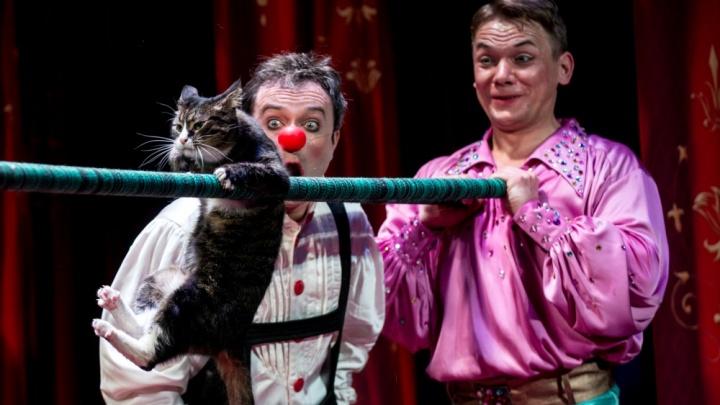 Афиша на неделю: Театр кошек Куклачева и концерт музыканта-путешественника из Германии