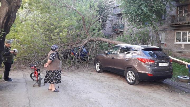Старое дерево во дворе дома в Завокзальном рухнуло на машину, припаркованную на газоне