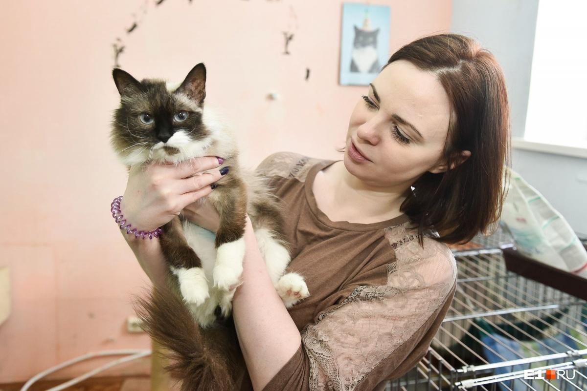Кстати, все котики на фото — питомцы Центра реабилитации животных. У них нет хозяев, и  они будут рады их обрести