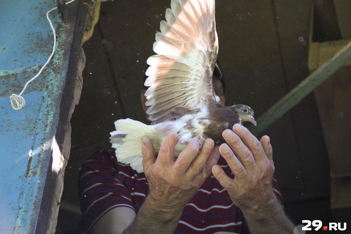 «А кто их будет сейчас покупать?»: как доживает свой век одна из последних голубятен Архангельска