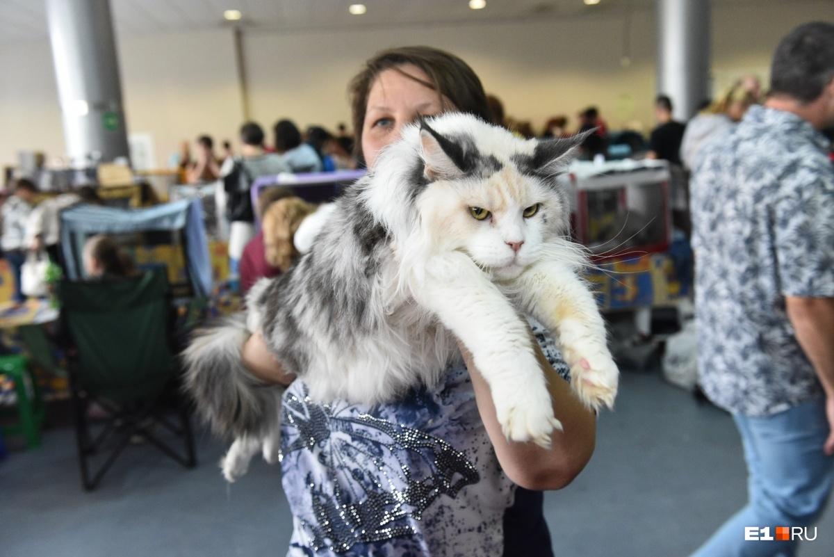 Некоторые котики выглядят очень серьёзными, но при этом не менее милыми