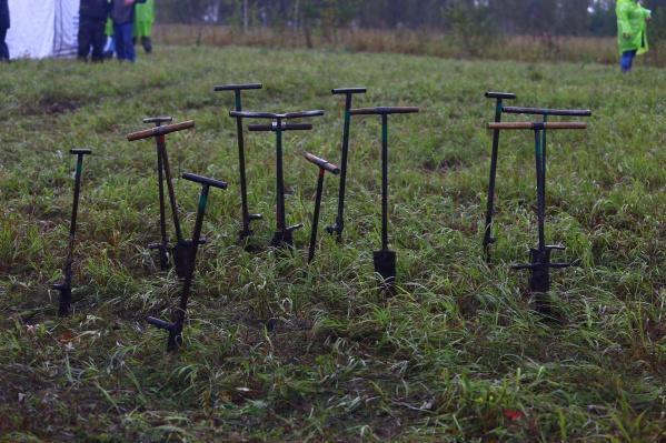 После лесных пожаров в Сибири были собраны деньги на посадку 1 миллиона деревьев