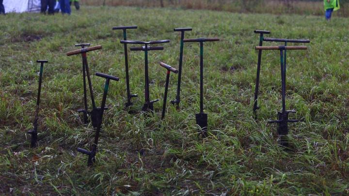 Вывезли в поле, дали лопаты: две сотни человек поехали сажать сосны под Новосибирском на акции S7