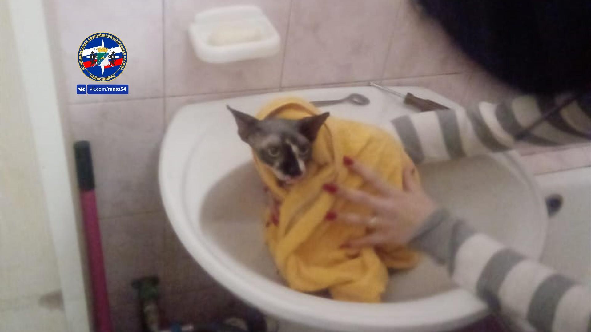 Хозяйка не смогла вытащить кота самостоятельно, а соседи пугались его вида