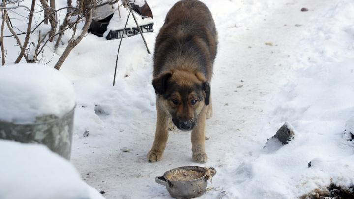 Сотрудники «Спецавтохозяйства» пытались продать корм бездомных собак