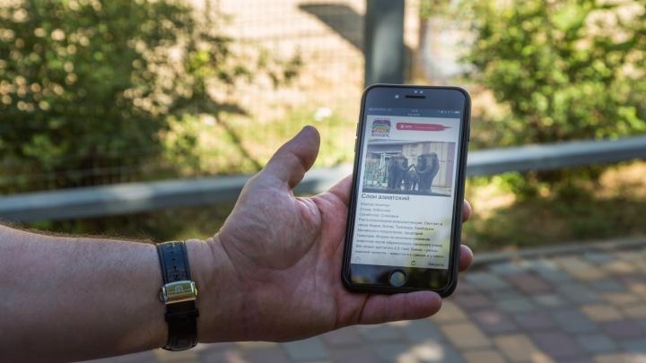 В ростовском зоопарке начали проводить экскурсии с помощью мобильного гида на смартфонах