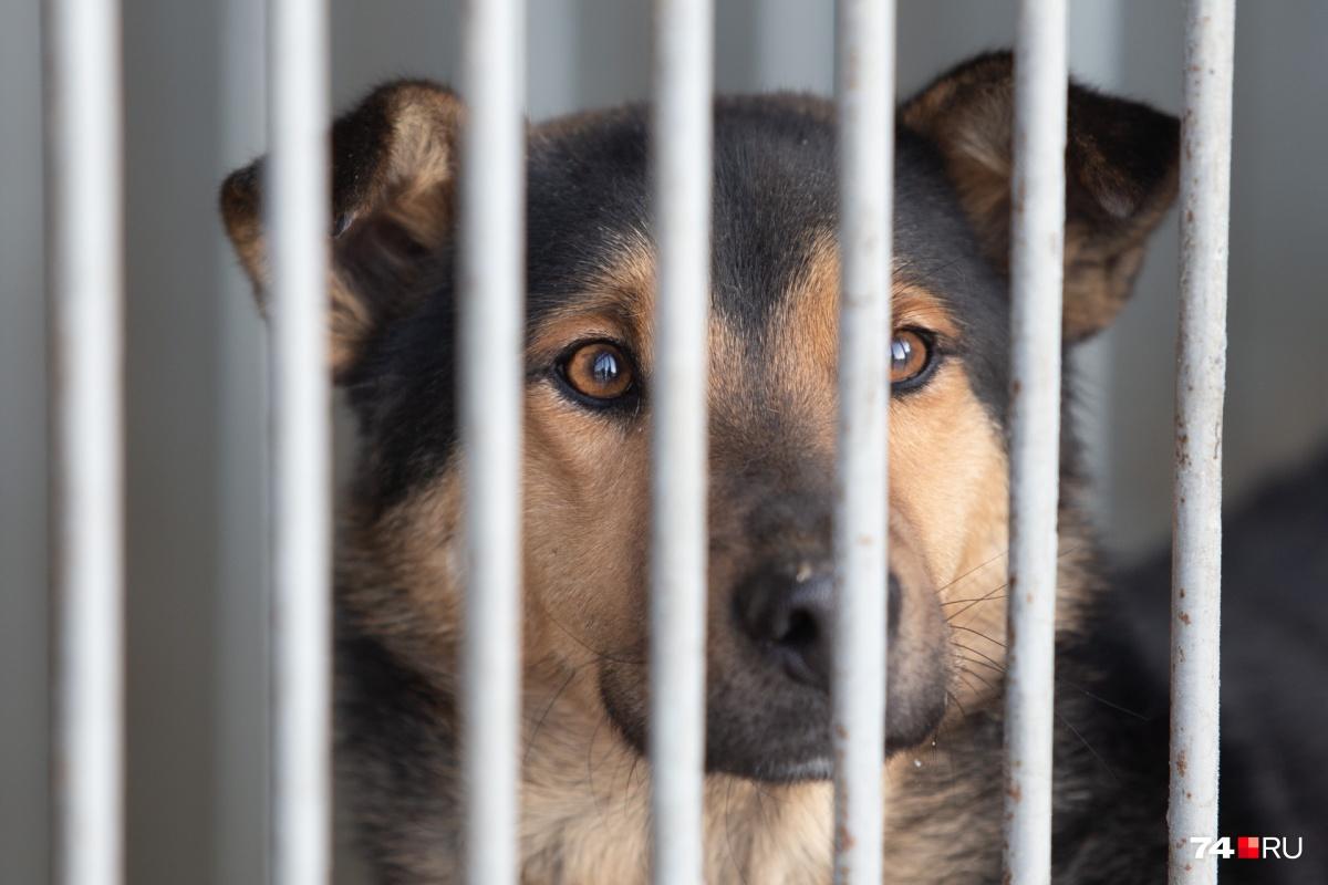 Пока бездомных животных содержат в приёмнике «ГорЭкоЦентра»