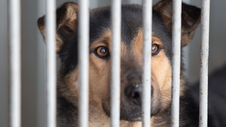 Челябинская мэрия потратит больше 13,7 миллиона на отлов бездомных собак и кошек
