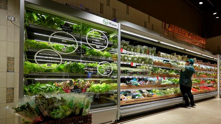 Выращивают напоказ: новосибирцы поставили в дорогом супермаркете теплицу с рукколой и фризе
