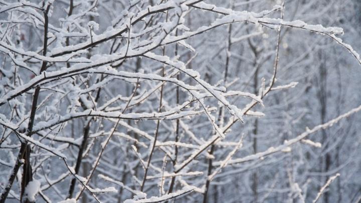 Резкое потепление и снегопад: рассказываем о прогнозе погоды в Прикамье на выходные