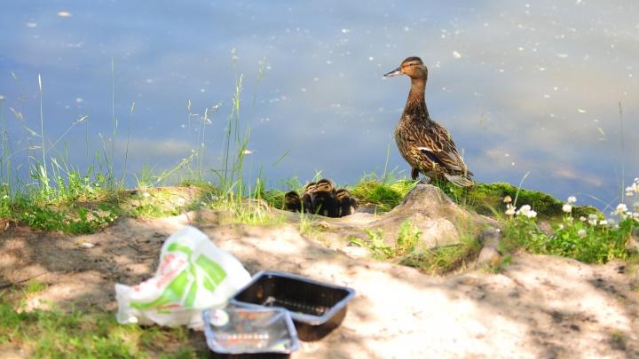 Минприроды ищет, кто создаст проект по очистке озера Шарташ. Заплатят 8,5 миллиона
