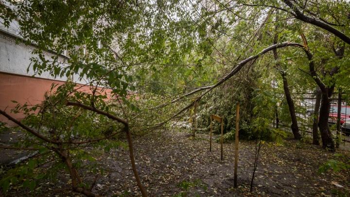 Новосибирцам начали приходить SMS о резком усилении ветра и грозах