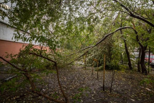 В Новосибирске ветер будет значительно слабее, чем по области