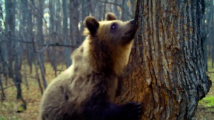 В Башкирии фотоловушка засекла медведя