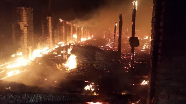 Полторы сотни телят погибло в пожаре на ферме под Новосибирском