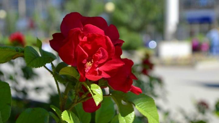 Цветущий Красноармейский: смотрите фоторепортаж с юга Волгограда