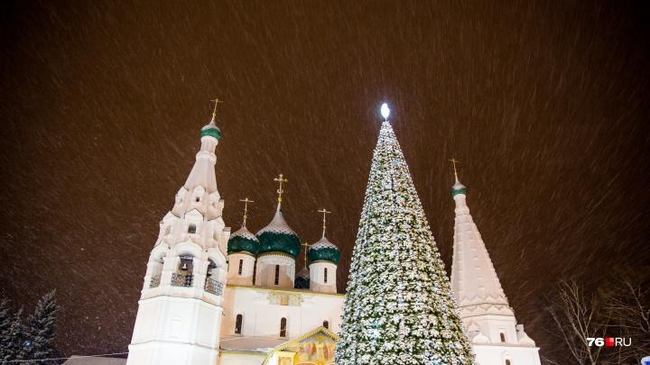 Дешёвая ёлка и дорогие музыканты: сколько денег ярославские власти потратили на Новый год
