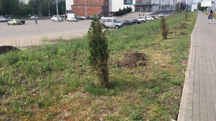 «Прощайте, туи!»: на Московском шоссе начали высаживать новые деревья