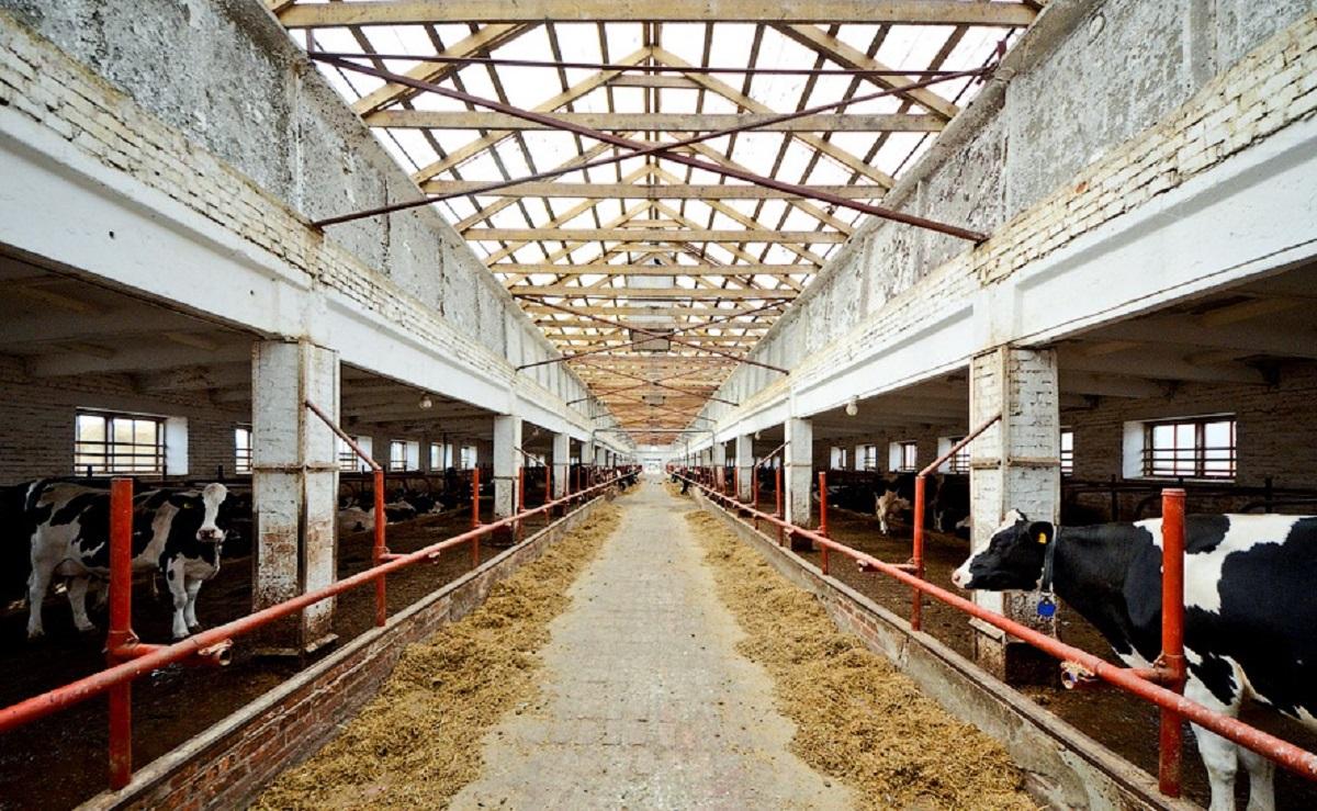 Новосибирский производитель молока создал электронное досье на каждую из трёх тысяч коров