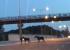 Осторожно, лоси: екатеринбуржцы второй день подряд наблюдают животных на Кольцовском тракте