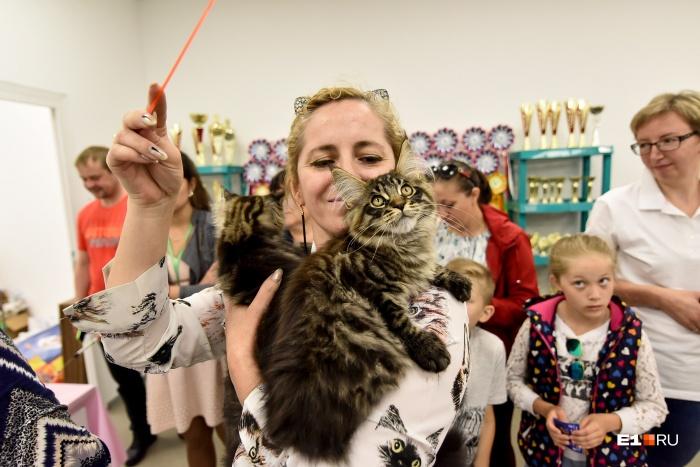 Хозяева играют с котиками на выставке, чтобы показать их характер