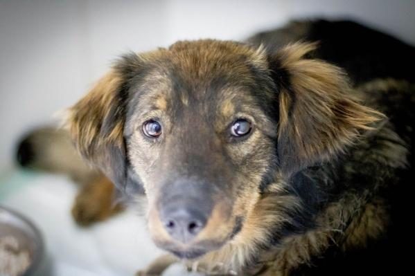 Собачка много страдала при жизни, рассказывают волонтеры