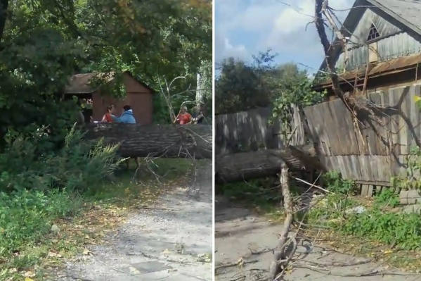 Дерево снесло столб и оборвало провода