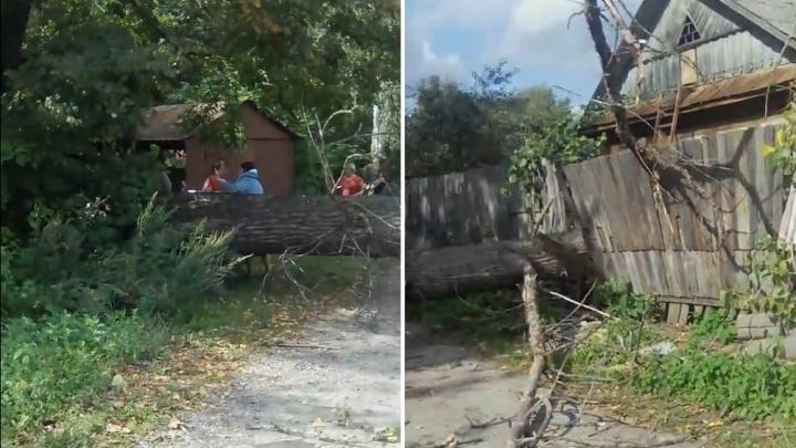 Прямо во двор: упавшее дерево обесточило в Ярославле две улицы