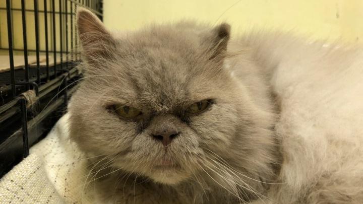 Оставили плед и корм: возле пермского аэропорта выбросили кота в переноске