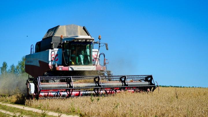Красноярская агрофирма накормит Россию пшеницей