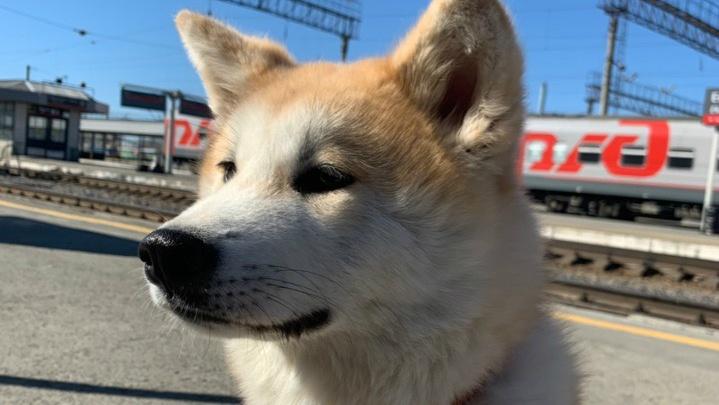 «Застряла под машиной»: в Челябинске нашли собаку порноактрисы