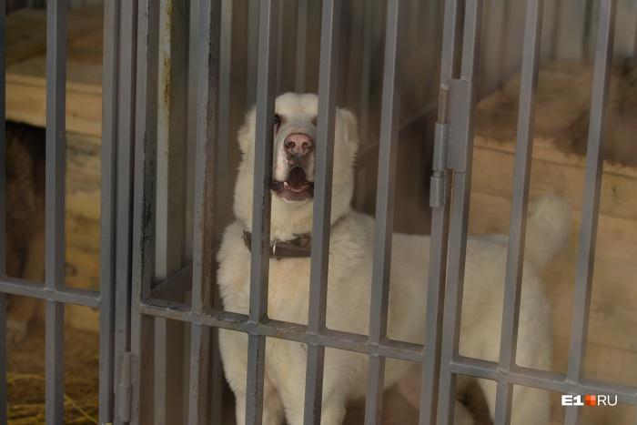 В день открытых дверей можно выбрать себе преданного друга или просто помочь животным