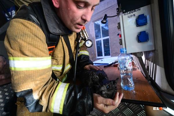 Пожарного, откачавшего кота, зовутМихаил Пашкевич