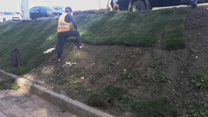 «Давим траву катками»: на размытом склоне у Ботанического сада постелили рулонный газон
