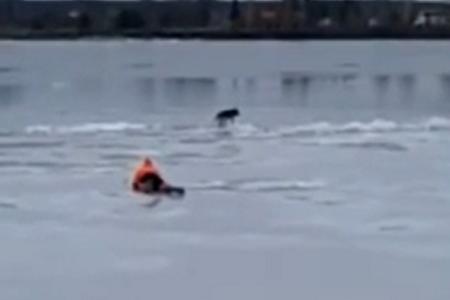 «Настоящие герои!»: в Ярославле на реке спасли с тонкого льда испуганную собаку. Видео