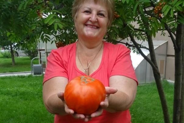Сибирячка вырастила в огороде гигантский помидор