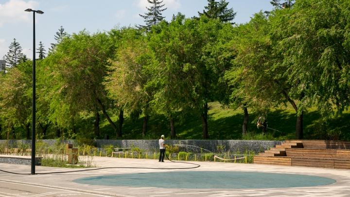 Только крупномеры и модные клумбы: в Красноярске меняют правила озеленения