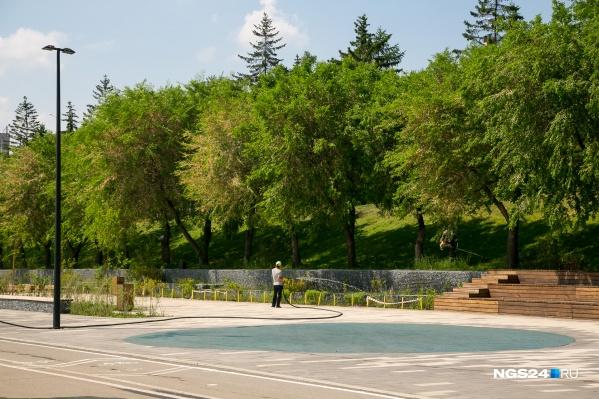 По новым правилам в городе больше не будут высаживать «деревья-прутики»